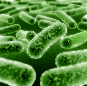 A Practical Guide to Probiotics